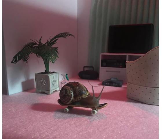 Les escargots stars d'Instagram !