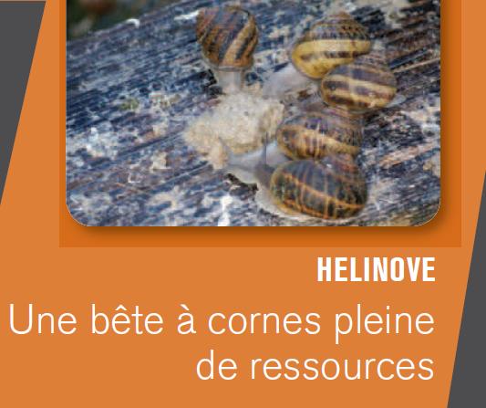 HELINOVE : LE POTE PASSIONNÉ DES ESCARGOTS !